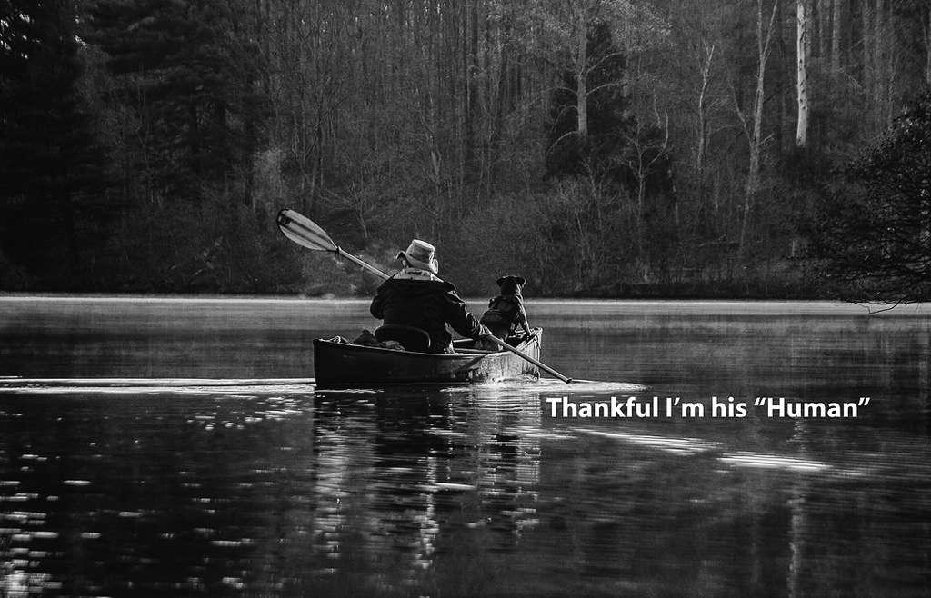 Dankbaarheid of teleurstelling